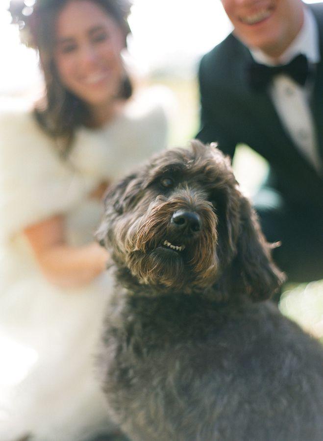 chien mariage en automne