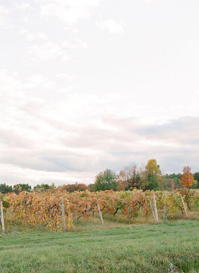 vignes mariage en automne