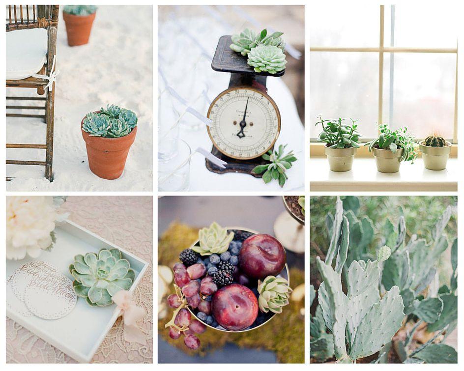 succulentes decoration